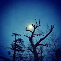 氷みたいな月 - merle メルル