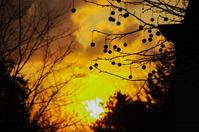 木の実s - 雲空海