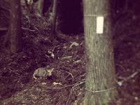 鹿と電柵と食用ホオズキの種まき - にじまる食堂 & にじまる農園