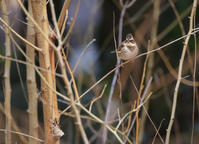 山田池公園にて、その2 - ぼくの写真集2・・・Memory of Moment