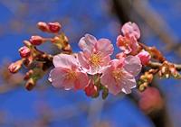春遠し - イーハトーブ・ガーデン
