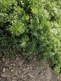 春に向けて - 暮らしと植物のブログ