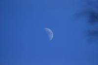 昼間 月を撮ってみました。 - 平凡な日々の中で