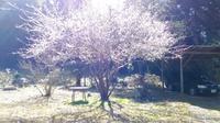春の光 - ひび 日々