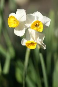 早春の花 - しあわせ色のスケッチ