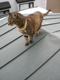 ちょこの屋根散歩 - 猫の銅版画