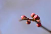 漸く花の色が・・・ - 玉家の生存報告