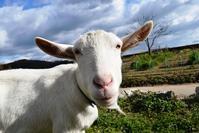 岡山県・牛窓で暮らす人たちとの優しい時間 - ハッピー・トラベルデイズ