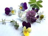 """ハーブや精油の学び、講座について - 英国メディカルハーバリスト&アロマセラピストのブログ""""Herbal Healing 別館"""""""