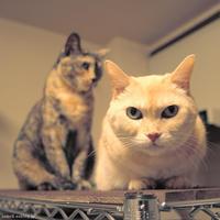 2猫 - 賃貸ネコ暮らし|賃貸住宅でネコを室内飼いする工夫