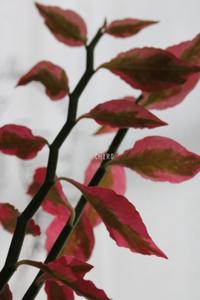 赤には赤の、緑には緑の・・・ - CHIROのお庭しごと