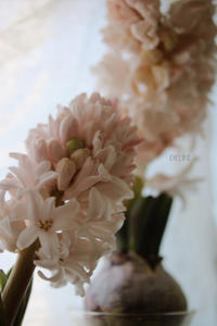 甘い香りのご褒美 - CHIROのお庭しごと