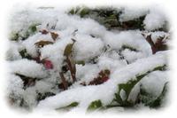 雪です。 - scorpion