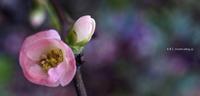 春近し - A  B  C