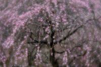季節の花 - 年年歳歳写真と共に