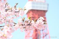 東京タワーめじろ。 - *ぷるはあと*
