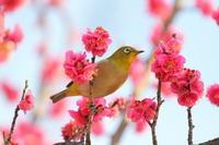 春を呼ぶ - kzking1963 Digital Photo Diary