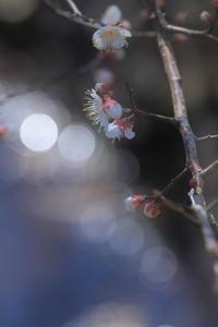 めざめの季節 - kzking1963 Digital Photo Diary