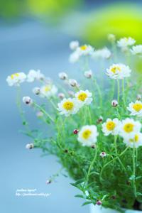 花かんざし - jumhina biyori*