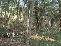 冬散歩 - yamatoのひとりごと