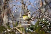 万願寺の森で探鳥会 2017/01/26 - 万願寺通信