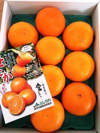 ふるさと納税⑲ 八幡浜市のせとか、果汁たっぷり♪ - KOTOコレ2016