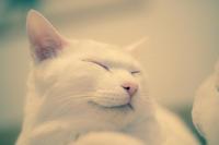 すこしおやすみ。 - Omoブログ