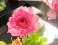 花処・和のポーセリン - RikoのきまぐれDiary       綺麗・可愛い・楽しい・幸せ!日記