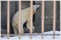ほっきょくぐまのいちにち 2017/02/05 - メタのマクロ視点な奇跡なんて白熊の為