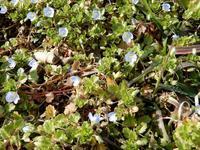 春らしくなってきた・・・1 - 【出逢いの花々】