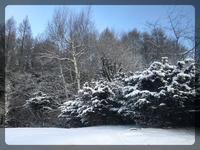 雪再び - 森の扉