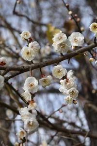 17年 早春の自然(4)…もう咲いてる(3) - ふぉっしるもしてみむとてするなり