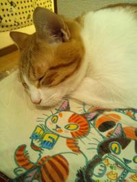 第2回 即興!楽描き!猫描き会  - 神楽坂 路地裏 ふくねこ堂