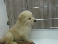 ホームセンター・可愛い子犬と子猫達 - 活花生活(2)