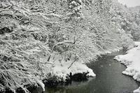 中雪の針畑雪・・・・積雪が1m超えに。 - 朽木小川より 「itiのデジカメ日記」 高島市の奥山・針畑郷からフォトエッセイ