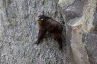 ムツ - 動物園へ行こう