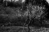 畑に春の装い - HDK-KNMT