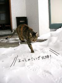 雪の玄関とちょこちゃん - 猫の銅版画