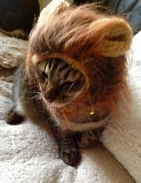 《トラちゃん占いは毎月1日》2月13日・地震体感と検証 - 猫丸ねずみの大荒れトーク