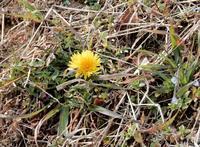 春らしくなってきた・・・2 - 【出逢いの花々】