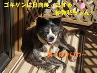 ささやかな幸せ🎵🎵 - もももの部屋(家族を待っている保護犬たちと我家の愛犬のブログです)