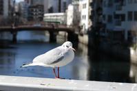 桜川橋にて ~野毛スナップ~ - 鴉の独りごと