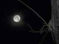 2月の満月の夜 - オヤヂのご近所仲間日記