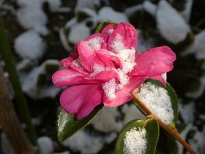 冬の 有る風景 - つれづれ漫遊記