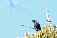 熊野神社に集う野鳥(2月11日) - 何でも写真館