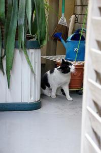 最近の猫事情5 - 鳥会えず猫生活