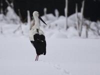 再び大雪が・・・  - 自然がいっぱい3