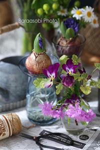 ブルーのヒヤシンス - バラと遊ぶ庭