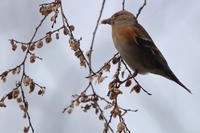 街中の山で群れるカラス - 野鳥写真日記 自分用アーカイブズ