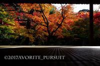 圓光寺の紅葉 - favorite pursuit
